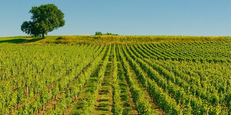 Bordeaux-i borvidék